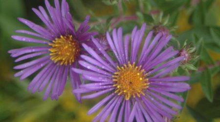 Autumn Plant Sale @ Cincinnati Nature Center, Rowe Woods location