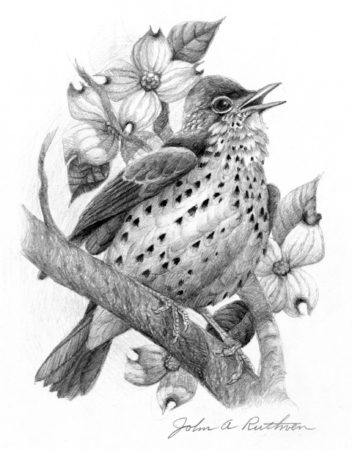 Wood Thrush Conservation Award