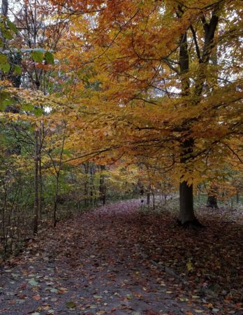 Rowe Woods Visitor Center is CLOSED. Grounds are open 8 am to 5 pm
