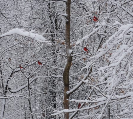 Christmas Bird Count @ Cincinnati Nature Center's Rowe Woods Visitor Center