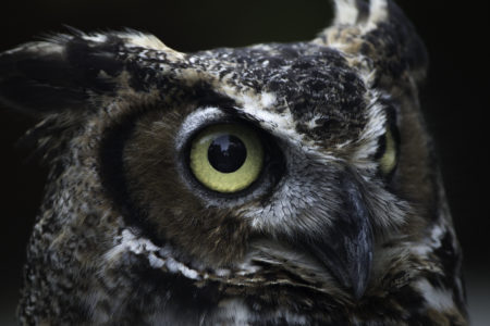 Owl Prowl @ Cincinnati Nature Center - Rowe Woods