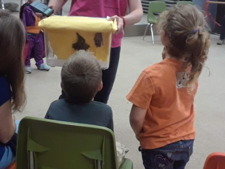 Bat Night: The Truth about Bats - For Families @ Cincinnati Nature Center's Rowe Woods