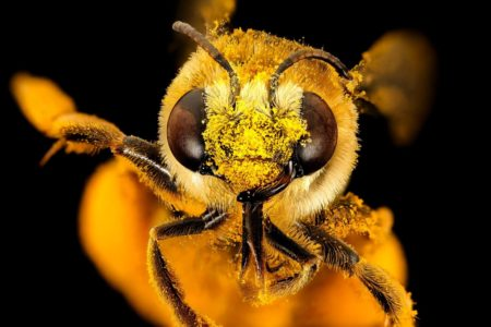 Conversations on Conservation: Bees in Your Backyard