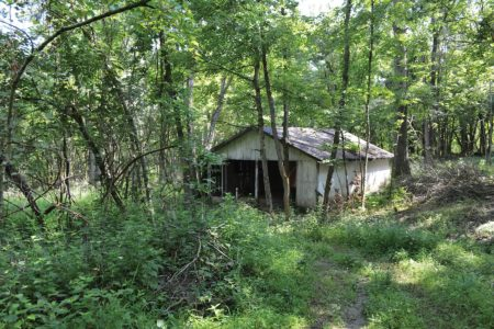 Guided History Hike - Fernwood Trail @ Cincinnati Nature Center, Rowe Woods location