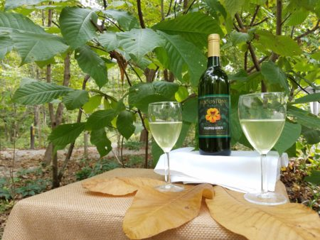 Everything Pawpaw - Unveiling of our Pawpaw Wine @ Cincinnati Nature Center, Rowe Woods