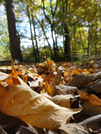 Hike for Your Health with Roads Rivers and Trails at LBF&T @ Cincinnati Nature Center, Long Branch Farm & Trails