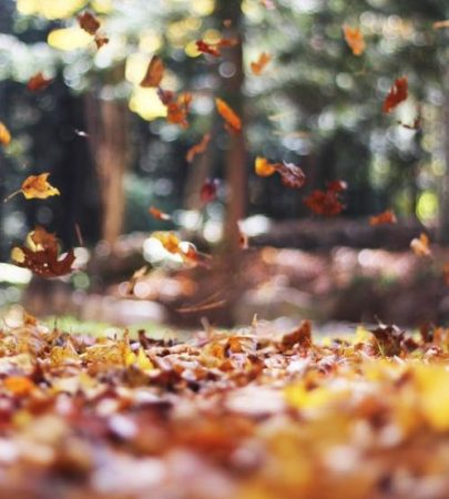 Falling Leaves Family Program 11/8/2019 @ Cincinnati Nature Center, Rowe Woods