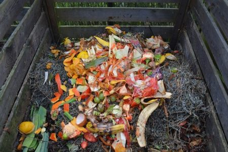 Conservation Starters: Composting @ Cincinnati Nature Center, Rowe Woods