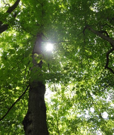 CANCELED: Forest Bathing at Long Branch Farm & Trails @ Long Branch Farm & Trails