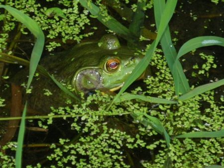 CANCELED: Froggy Spotting Adventure at Long Branch Farm & Trails @ Cincinnati Nature Center, Long Branch Farm & Trails
