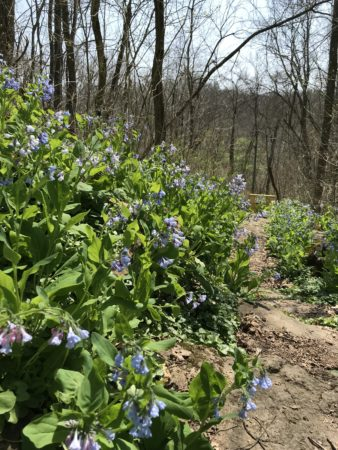 """Woodland Wildflowers – Using Science and Stories to """"See"""" the Forest 3/24/2019"""