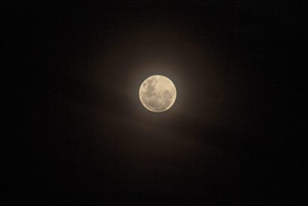 Full Moon Walk: Raccoon Moon at Long Branch Farm & Trails @ Long Branch Farm & Trails