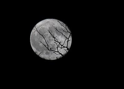 Full Moon Walk: Beaver Moon at Long Branch Farm & Trails @ Long Branch Farm & Trails