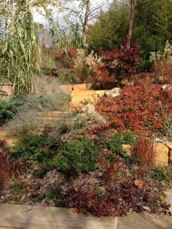 Garden Design: Using Native Plants to Create a Visually Appealing Deer-Resistant Garden