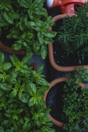 Herb Gardening: Good for You, Good for Wildlife