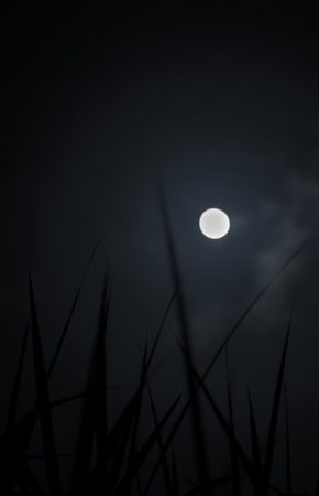 CANCELED: Full Moon Walk: Grass Moon at Rowe Woods @ Cincinnati Nature Center, Rowe Woods