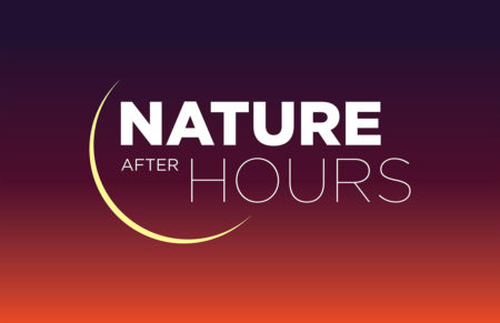 Nature After Hours: Monarch Season @ Cincinnati Nature Center, Rowe Woods, Center for Conservation