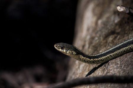 Slithery Snakes!
