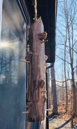 Make Your Own Woodpecker Feeder @ Cincinnati Nature Center, Rowe Woods