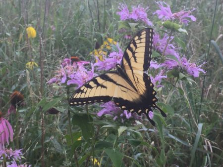 CANCELED: Native Garden Care @ Cincinnati Nature Center, Rowe Woods