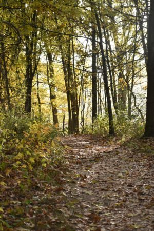 Forest Bathing at Long Branch Farm & Trails 10/10/2021 @ Long Branch Farm & Trails