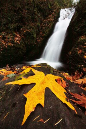 Fall Foliage & Waterfalls Photography Workshop @ Cincinnati Nature Center, Rowe Woods